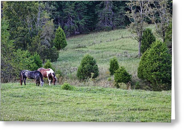 Horses In Summer Greeting Card