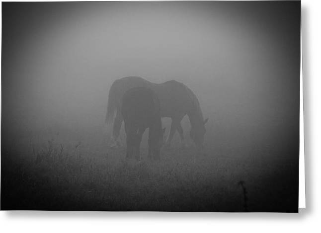 Greeting Card featuring the photograph Horses In The Mist. by Cheryl Baxter