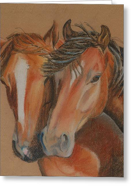Horses Looking At You Greeting Card