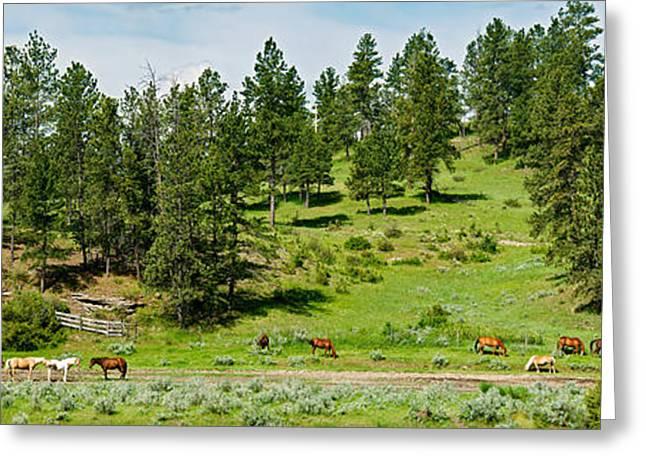 Horses On Roundup, Billings, Montana Greeting Card