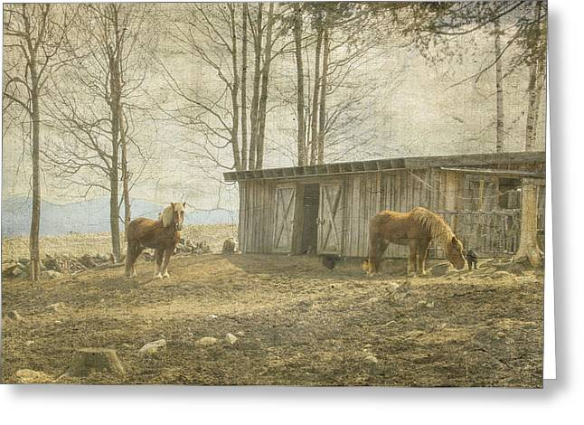 Horses On The Farm Greeting Card