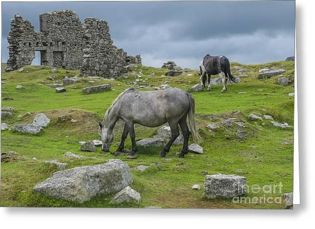 Horses On The Moors Of Dartmoor Greeting Card by Patricia Hofmeester