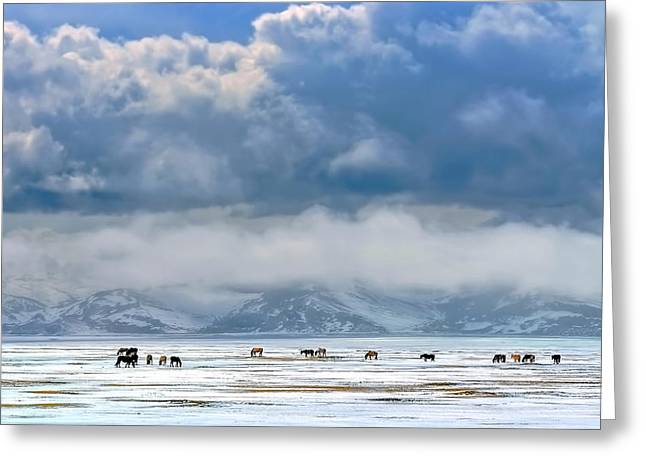 Horses On The Snow Greeting Card