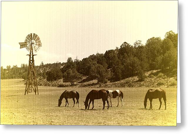 Horses Greeting Card by Paul Van Baardwijk