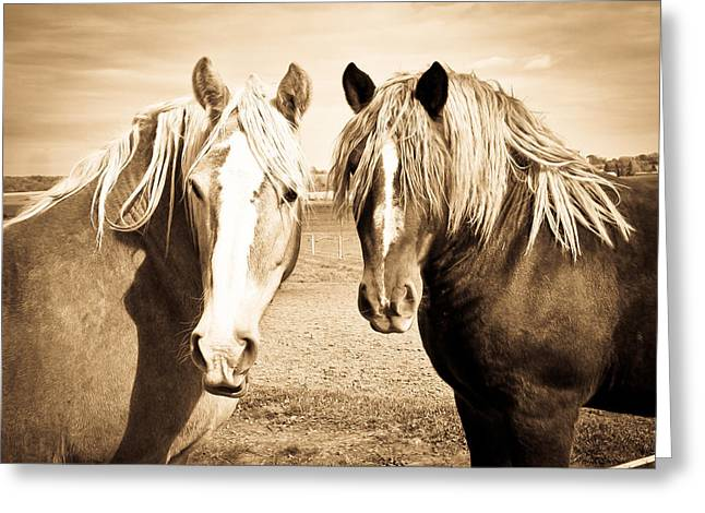 Horses  Greeting Card by Paulina Szajek