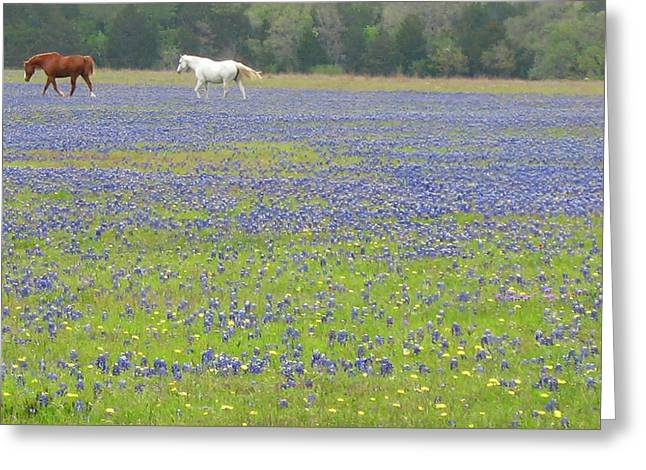 Horses Running In Field Of Bluebonnets Greeting Card by Connie Fox