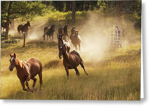 Horses Running Into Pasture In Early Greeting Card by Piperanne Worcester