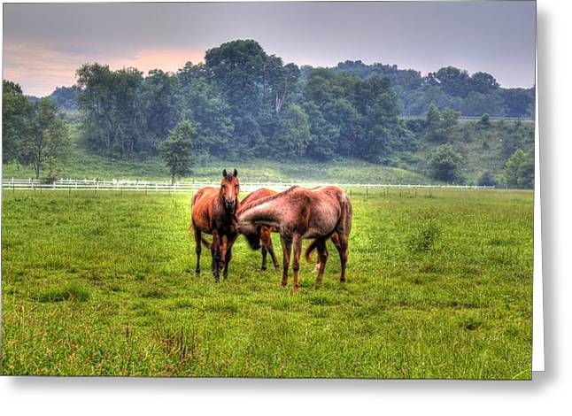 Horses Socialize Greeting Card by Jonny D