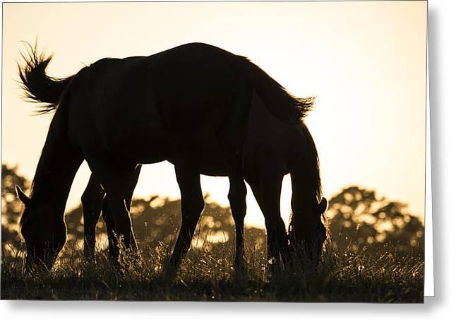 Horses Sunset Greeting Card by Michael Mogensen
