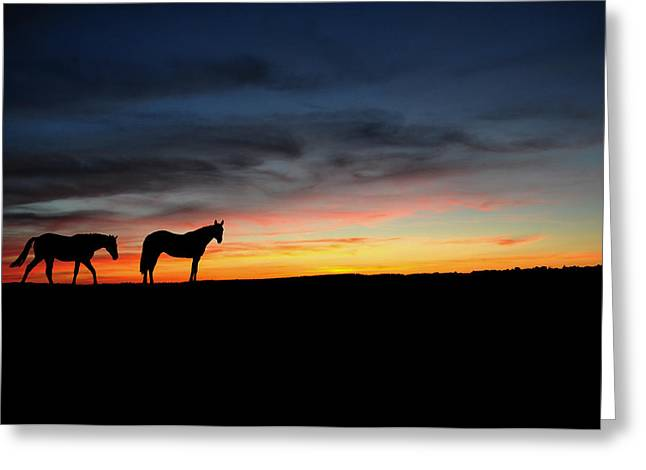 Horses Walking In The Sunset Greeting Card by Aged Pixel