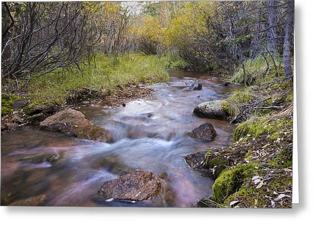 Horsethief Creek - Cripple Creek Colorado Greeting Card