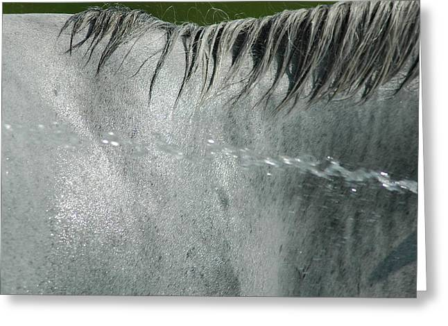 Cooling Down White Horse Greeting Card