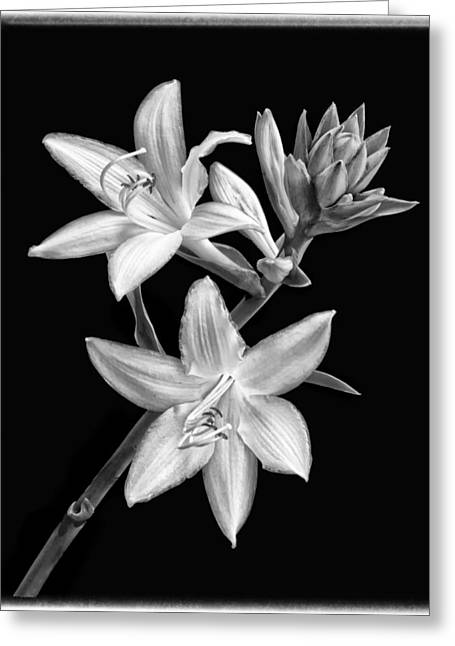 Hosta Flowers In Black And White Greeting Card by Carolyn Derstine