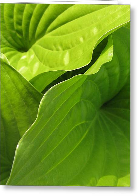 Hosta Leaves Greeting Card by Tracy Male