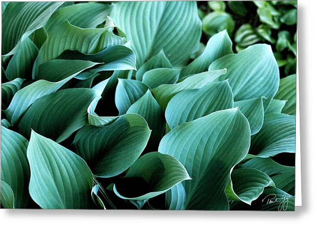 Hostas Greeting Card