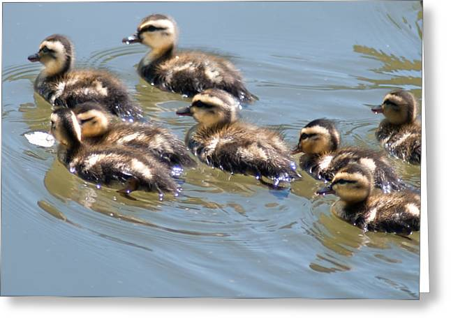 Hot Chicks Out For A Swim Greeting Card by Optical Playground By MP Ray