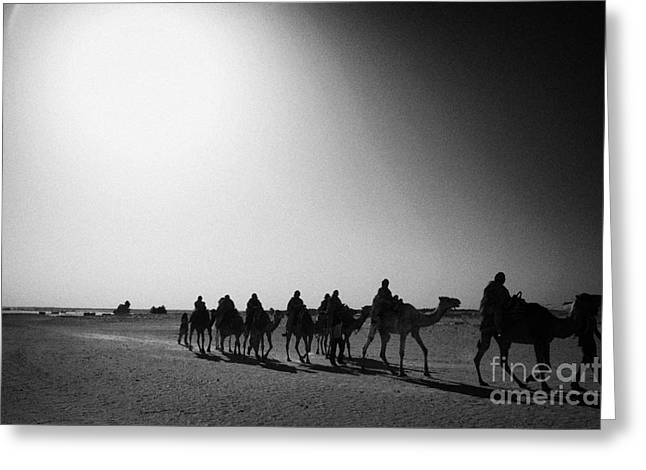 hot desert sun beating down on camel train in the sahara desert at Douz Tunisia Greeting Card by Joe Fox