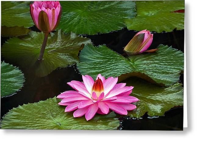 Hot Pink And Green Tropical Waterlilies Greeting Card