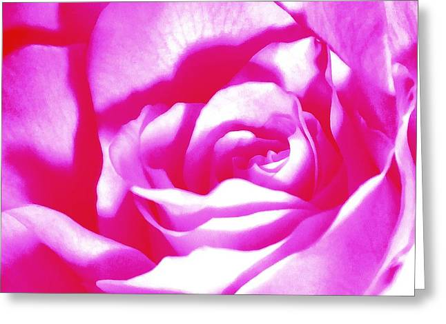 Hot Pink And White Rose Greeting Card by Janine Riley