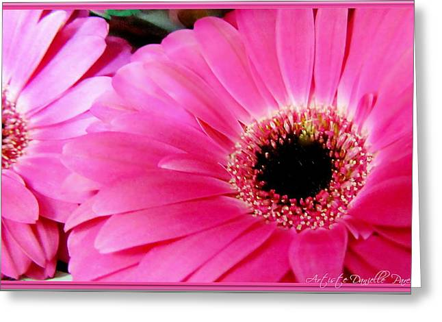 Hot Pink Gerber Daisies Macro Greeting Card by Danielle  Parent