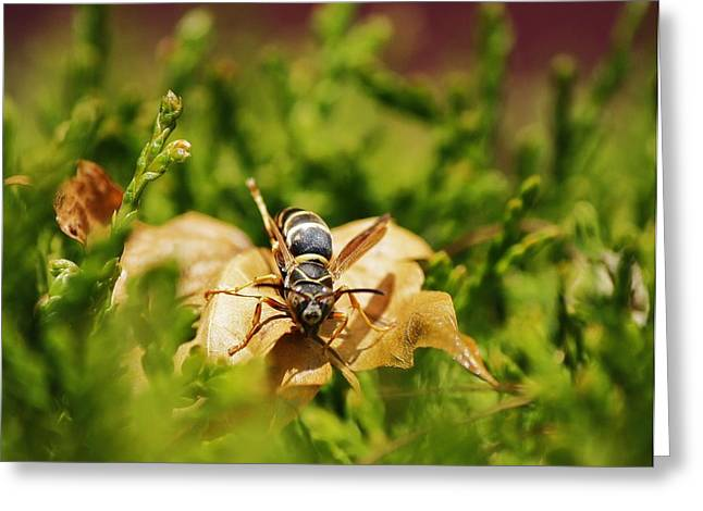 Greeting Card featuring the photograph Hot Wasp... by Al Fritz