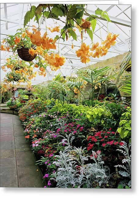 Hothouse Flowers Greeting Card