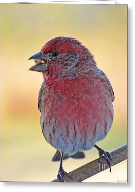 House Finch II Greeting Card by Debbie Portwood