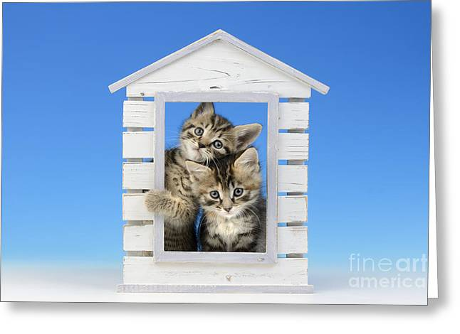 House Of Kittens Ck528 Greeting Card by Greg Cuddiford