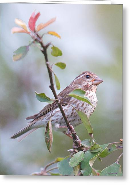 House Sparrow In The Apple Tree Greeting Card