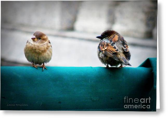 House Sparrows Greeting Card by Lainie Wrightson