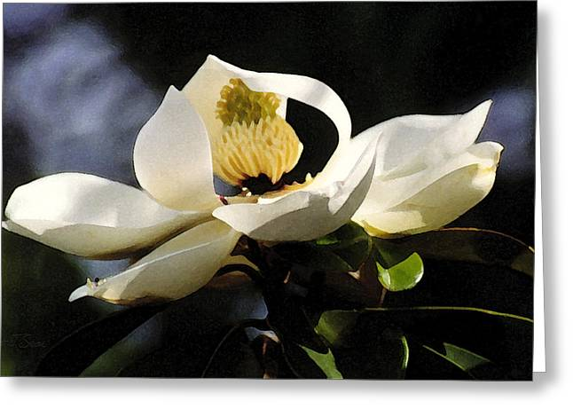 Houston Magnolia Greeting Card