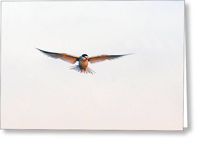Hover Greeting Card by Barry Goble