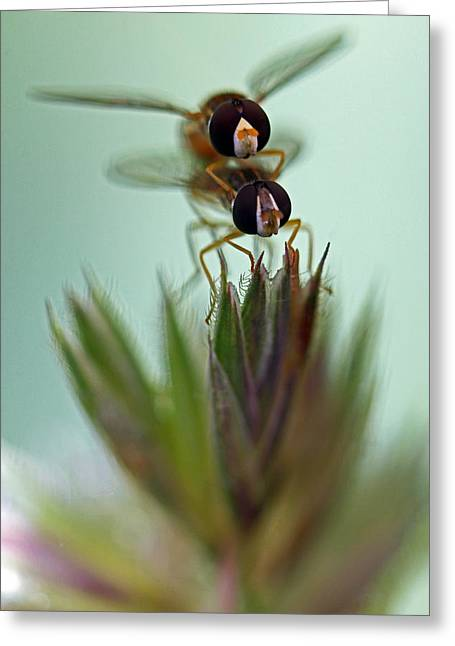 Hover Bugs Greeting Card