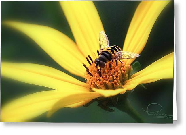 Greeting Card featuring the photograph Hover Fly On Flower by Ludwig Keck