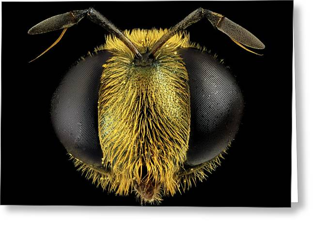 Hoverfly Head Greeting Card by Us Geological Survey