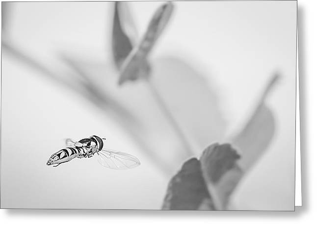 hoverfly in the pea patch B/W Greeting Card