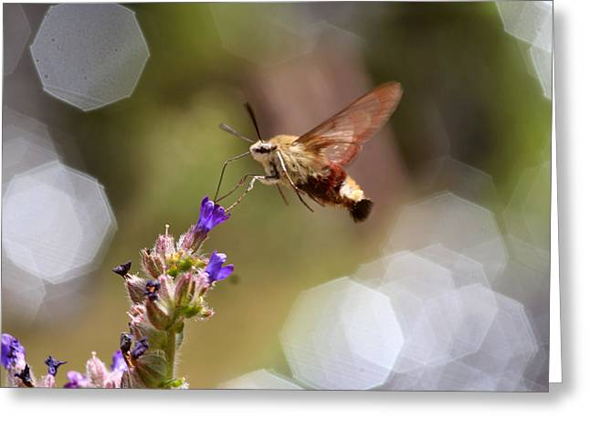Hovering Pollination Greeting Card