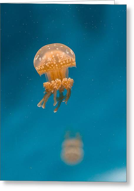 Hovering Spotted Jelly 1 Greeting Card by Scott Campbell