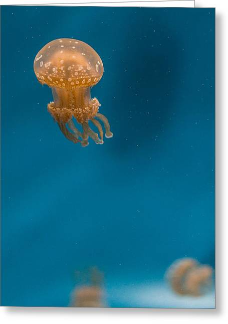 Hovering Spotted Jelly 2 Greeting Card by Scott Campbell