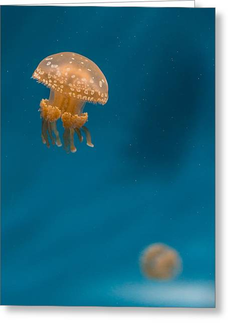 Hovering Spotted Jelly 3 Greeting Card by Scott Campbell