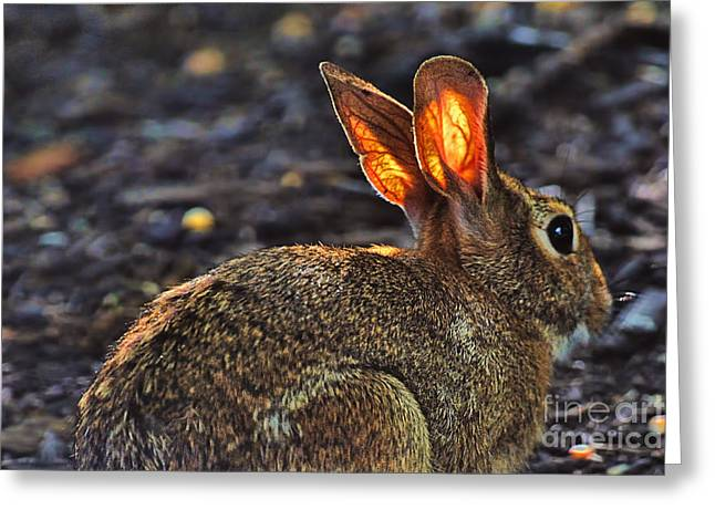 How Bout Them Ears Greeting Card by Dan Friend
