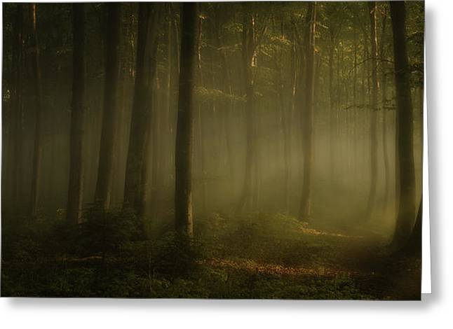 How Can Words Express The Feel Of Sunlight In The Morning Greeting Card by Norbert Maier