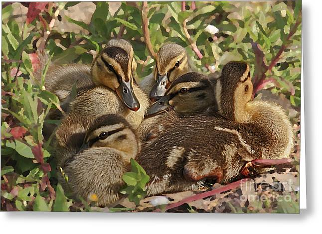 Greeting Card featuring the photograph Huddled Ducklings by Kate Brown