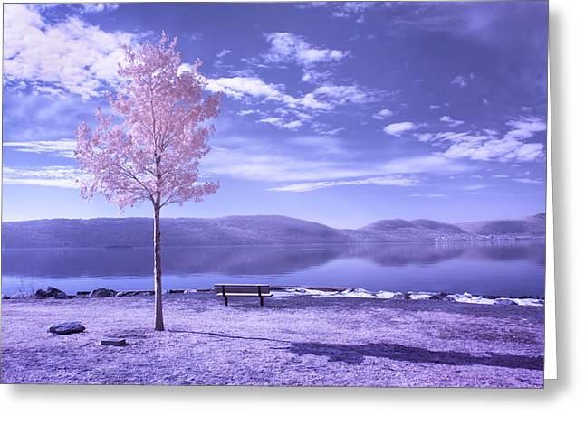 Greeting Card featuring the photograph Hudson River Tree And Bench by Dave Beckerman