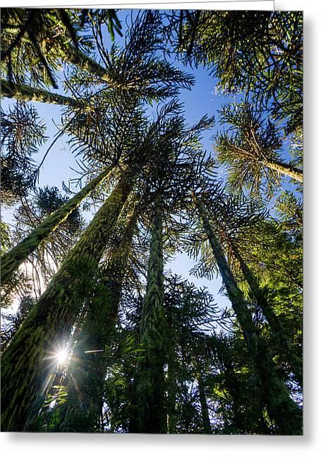 Huerquehue National Park, Chile Greeting Card
