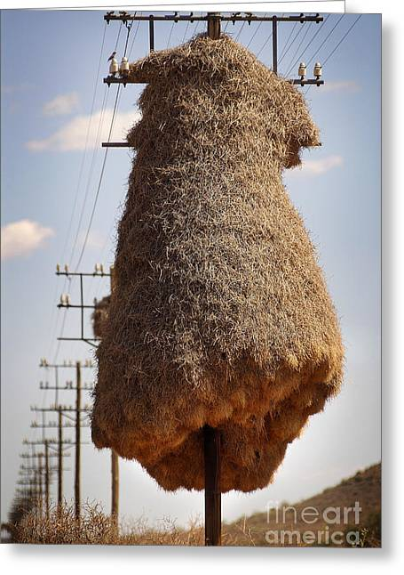Huge Birds Nest On Pole Greeting Card