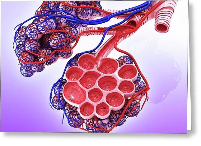 Human Alveoli Greeting Card