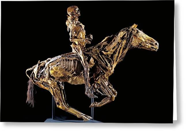 Human And Horse Anatomy Greeting Card
