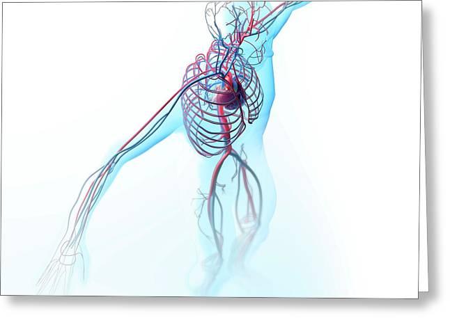 Human Circulatory System Greeting Card by Andrzej Wojcicki
