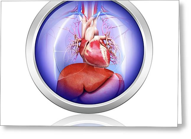 Human Heart And Liver Greeting Card by Pixologicstudio